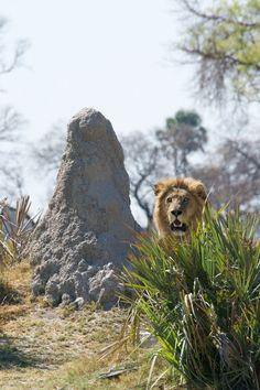 Best Safaris In The US Photos News And Safari - 10 best safaris in africa