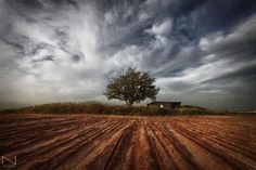 IMG_8425 by Noam Mai, via Flickr | landscape + field tree sky clouds + brown green blue
