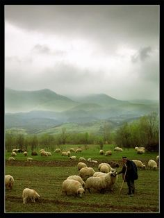 The shepherd ( the LORD is my shepherd i shall not want) 23rd psalm