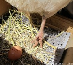 The Chicken Chick®: 8 Tips for CLEAN EGGS from Backyard Chickens