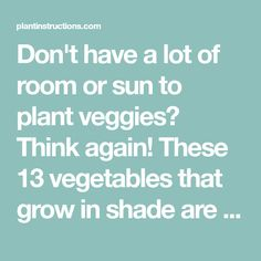 Don't have a lot of room or sun to plant veggies? Think again! These 13 vegetables that grow in shade are perfect for small gardens!