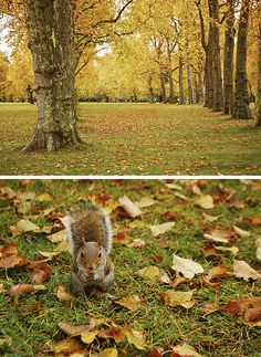 Autumn in Hyde Park (London) Hyde Park London, Richmond Park, London Summer, Us Road Trip, Us National Parks, World Cities, London England, Cool Photos, Beautiful Places