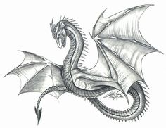 dragon drawings in pencil | Dragons » Drawings » Laura Campbell