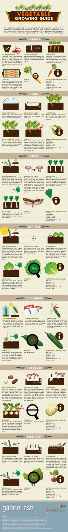 New gardeners will often find vegetable gardening to be quite challenging at first. It is completely understandable. Lots of unexpected problems may arise during the whole vegetable growing process–which could be exciting yet frustrating at the same time. To help you grow these popular vegetables, check out this awesome guide from Gabriel Ash.
