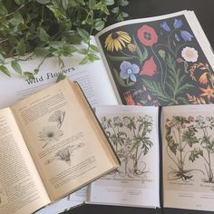 herbarium how-to — freshly pressed Book Aesthetic, Aesthetic Photo, Aesthetic Pictures, Classy Aesthetic, All The Bright Places, Botanical Illustration, Goblin, Botany, Book Worms