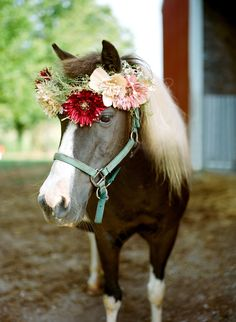 wedding pony for farm wedding #pony #weddingreception #weddingchicks http://www.weddingchicks.com/2014/03/13/homespun-antique-farm-wedding/