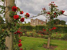 Rose Garden, Ardgillan Castle Continental Europe, Irish Sea, Republic Of Ireland, Most Beautiful Flowers, Dream Garden, Northern Ireland, Wildflowers, Great Britain, Castle