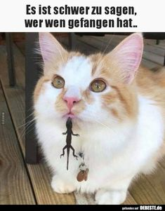 Humor Discover Animal Memes For The Bored Memes) - World& largest collection of cat memes and other animals Funny Animal Images Cute Animal Memes Animal Jokes Animals Images Cute Funny Animals Funny Animal Pictures Cute Baby Animals Funny Cute Cute Cats Funny Animal Images, Funny Animal Jokes, Funny Cat Memes, Animals Images, Cute Funny Animals, Funny Animal Pictures, Funny Cute, Funny Dogs, Cute Cats