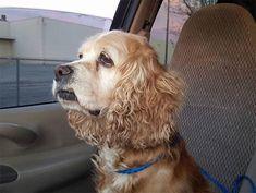 Cokie, la perra que fue abandonada por ser demasiado vieja