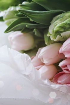 Pink Tulips ♥ The Heartbook