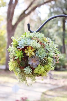 Succulent Kissing Ball by Rooted in Succulents www.rootedinsucculents.etsy.com