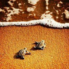 Al agua... turtles!