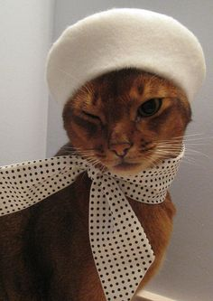 cat berets and neck scarves from CatAtelier