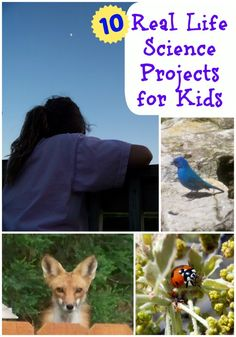 Families can help track birds and frogs, hunt for ladybugs, search the night sky and help with real-life science projects right from their own backyard!