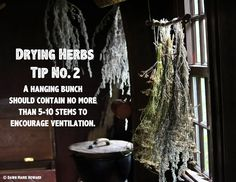 Drying Herbs: Tips for Preserving Your Garden Herbs Healing Herbs, Medicinal Plants, Natural Healing, Natural Medicine, Herbal Medicine, Organic Gardening, Gardening Tips, Fresco, Farm Gardens