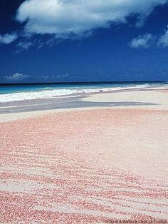 Farsighted Fly Girl: A Rosy Outlook  Pink Sandy beaches