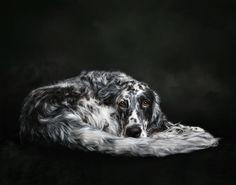 PORTFOLIO | Pouka Fine Art Pet Portraits