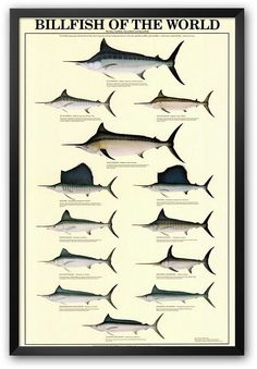 """Billfish of the World"" Framed Art Print. https://api.shopstyle.com/action/apiVisitRetailer?id=414026771&pid=uid8100-34415590-43"