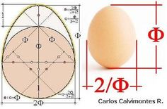 Image result for the number of gold Mathematics Geometry, Basic Geometry, Sacred Geometry, Golden Ration, Fibonacci Golden Ratio, Divine Proportion, Geometric Shapes Art, Architecture Concept Drawings, Math Art