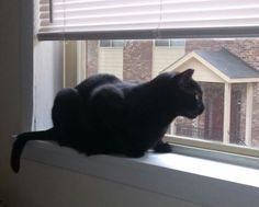 ♥❤️ BLACK CAT IN THE WINDOW ❤️♥