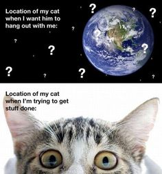 The location of my cat: so true :-)
