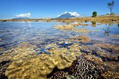 """Beautiful Reefs at Jailolo""    THIS PLACE AT KARANG ISLAND, JAILOLO, HALMAHERA UTARA- MALUKU, INDONESIA. Usually many many divers came here to explore beautifully indonesia's reef.    By: Tan Kiki Rustandar    Courtesy of: National Geographic Photo Contest"