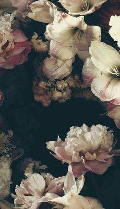 65 Ideas Wall Paper Floral Bedroom Powder Rooms For 2019 Motif Floral, Floral Wall, Love Wallpaper, Wallpaper Backgrounds, Wallpapers, Floral Bedroom, Botanical Art, Planting Flowers, Beautiful Flowers