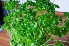 Vastartalmú növények - Egészség | Femina