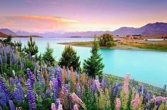 Lake Tepako, New Zealand.