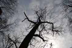 Sächsische Schweiz - Bäume von unten...fand es als Motiv cool :) - Apr 2014