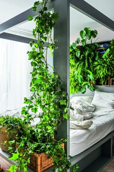 mieszkanie w stylu jungle Oversized Mirror, Aquarium, Urban, Awesome, Plants, Furniture, Instagram, Home Decor, Interiors