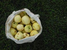 Papierówki... That's how real apple looks like #apple #health #healthylifestyle #fruits #food #summer