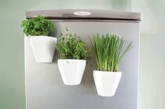 Magnetic China Herb Planter