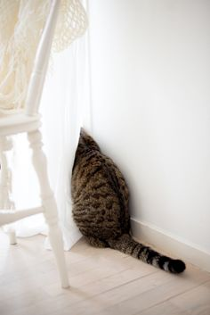 SHE'LL NEVER FIND ME HERE……….(OH BOY-------SOMEBODY JUST KNOCKED OVER A HUGH, NEWLY-POTTED FLOWER ARRANGEMENT)……….ccp