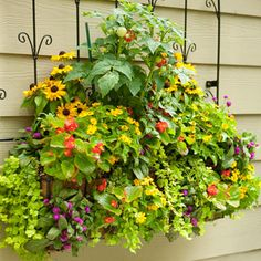 Urban Gardening: Go Vertical  Urban gardens may not have acres of ground for planting but they can always grow up. Walls, trellises, and hanging baskets extend the growing area vertically.  Use posts or walls with brackets to support hanging baskets of herbs or flowers.  Large containers can be topped with a trellis, obelisk, or tomato cage for extra growing space. Pole beans trained on a trellis or obelisk are a good choice for urban gardening because they continue producing beans throug…