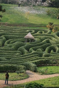 Glendurgan Garden in Cornwall, England has a cherry laurel maze (Prunus lusitanica) that is 176 years old. Another for my bucket list!