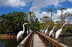Egret Boardwalk - Kissimmee Florida USA