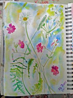 wildflower watercolour sketch in my journal....