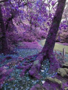 Mysterious Trees Photography  8 z 10 Purple by theheartoftheeye, $15.00