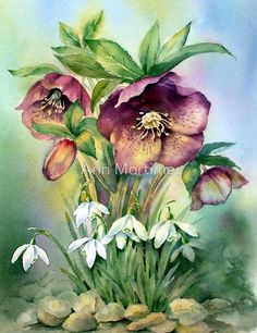 'Snowdrops and Hellebores' Photographic Print by Ann Mortimer – ahşap boyama – Bilder Watercolour Painting, Watercolor Flowers, Painting & Drawing, Watercolours, Botanical Prints, Beautiful Paintings, Painting Inspiration, Flower Art, Art Drawings