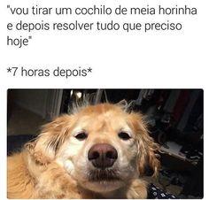 #cachorroétudodebom #sexta #amocachorro #petmeupet #filhode4patas