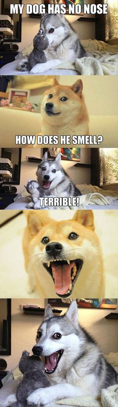 Fun Chain Reaction Activated (50 Pictures) #dog #funnydog #pets