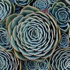 15 Plants That Teach Us Sacred Geometry : Waking Times