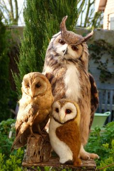 Eurasian Eagle Owl (bubo bubo) and two Barn Owl - Needle felted owls by Helen Priem