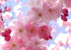 foto-la-primavera.jpg (558×401)