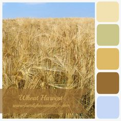 Paint Color Harvest Wheat Living Room