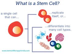 STEM CELL THERAPY IN INDIA AT AFFORDABLE COST What Is Stem, Stem Cell Therapy, Stem Cells, Disorders, India, Goa India, Indie, Indian