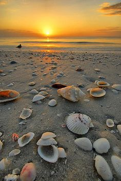 Beautiful sunset with sea shells to view