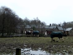 Pollok Park Glasgow, My Images, Scotland, Park, Animals, Animales, Animaux, Parks, Animal