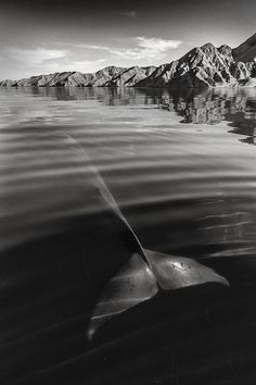whales-dolphins-sea-animal-photography-marine-life-christopher-swann-vinegret (5)